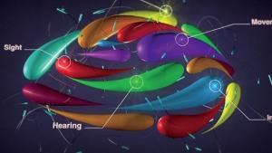 Color Brain Logo Animation